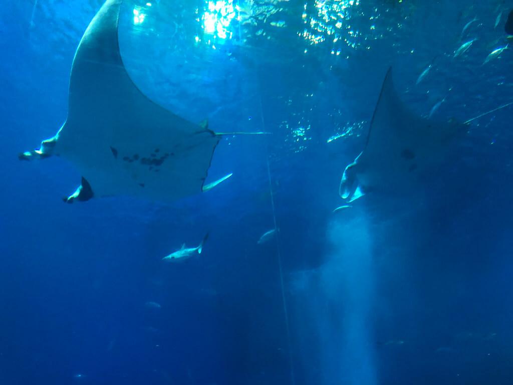 ルネッサンスリゾートオキナワ  宿泊記 アクティビティ 体験 子連れ 美ら海水族館